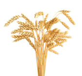 Stalks of wheat ears isolated on white background — Stock Photo