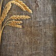 Stalks of wheat ears on the sacking — Stock Photo