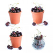 The bucket of cherries set isolated on the white — Stock Photo #12726905