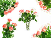 Red roses bouquet set isolated on the white — Stock Photo