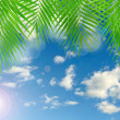 Stock Photo: Tropical background with lens flare effect