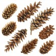 Stock Photo: Big set of cones various coniferous trees isolated on white