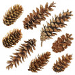 Royalty-Free Stock Photo: Big set of cones various coniferous trees isolated on white