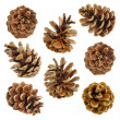Big set of cones various coniferous trees isolated on white — Stock Photo #12898469