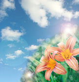 Beautiful lily flowers background with lens flare effect — Stock Photo