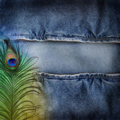 Background denim texture with peacock feather — Zdjęcie stockowe