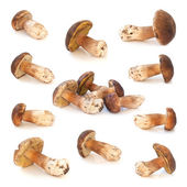 Wild mushrooms isolated on white background — Stock Photo