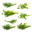 Parsley and dill isolated on white background — Stock Photo #49395137