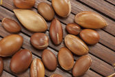Seeds of argan,Morocco plant for cosmetic — Stock Photo