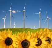 Sunflowers with drops ahead wind power plant — Stock Photo