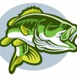 Stock Vector: Largemouth bass