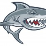 Great white shark — Stock Vector #21583309