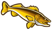 Walleye — Stock Vector