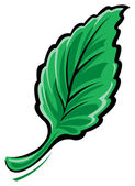 Mint leaf — Stock Vector