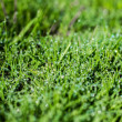 Stock Photo: Dew004