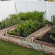 Stock Photo: Backyard organic vegetable garden