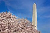 Washington Monument — Stock Photo