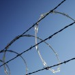 Barbed wire — Stock Photo