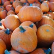 Stock Photo: Large pile of pumpkins