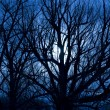 Stock Photo: Scary Moonlit Night