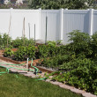 Vegetable Garden — Stockfoto #41364853