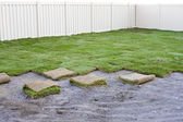 Green turf grass — Stock Photo