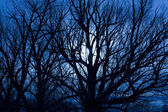 Scary Moonlit Night — Stock Photo