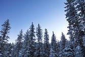 Stromy pod sněhem — Stock fotografie