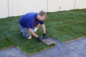 Man planting new grass — Stock Photo