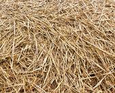 Dray hay stack background — Stock Photo