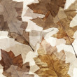 Dry autumn leafs grunge background — Stockfoto