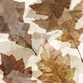 Dry autumn leafs grunge background — Stock Photo