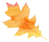 Watercolor maple leaf, autumn background — Stock Photo