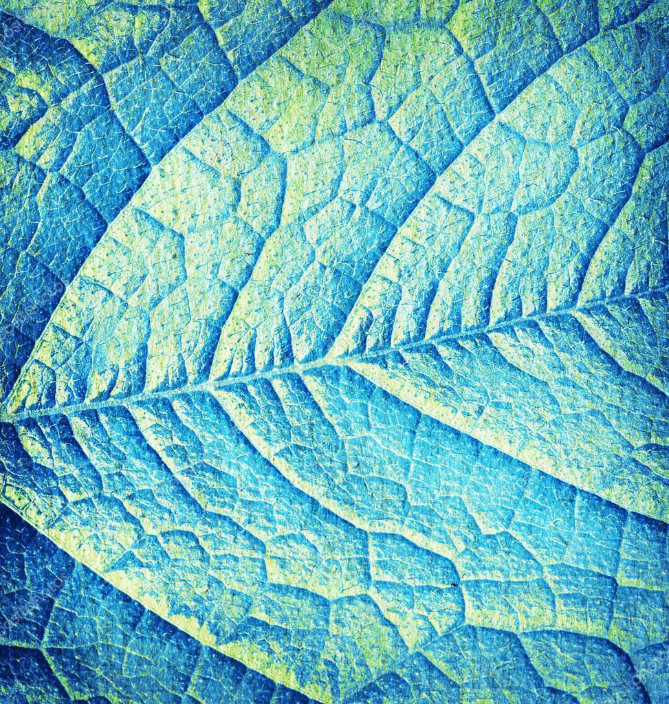 on leaf blue - photo #37