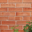 Brick brown wall texture with rose bush — Stock Photo #32608969