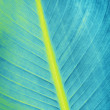 Stock fotografie: Blue leaf texture, close up background