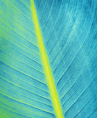 Blue leaf texture, close up background — Foto Stock