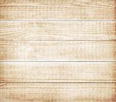 Чешуйчатогрудая амадина или пятнистый амадина (lonchura мелкоточечный) в Малайзии — Стоковое фото