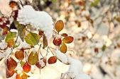 Foliage under the snow — Stock Photo