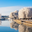 Winter willow tree at the riverside — Stock Photo