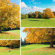 Stock Photo: Autumn tree set