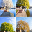 Stock Photo: Willow tree set