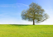 Tree at the top of the green hill — Stock Photo