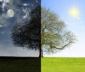 Day vs. night tree concept — Stock Photo