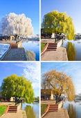 Willow tree set — Stock Photo