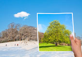 Gedenkwaardige foto zomer vs winter — Stockfoto