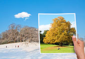 Minnesvärd bild höst vs vinter — Stockfoto