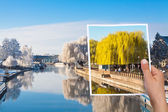 Memorable picture summer willow tree vs winter — Stock Photo