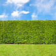Stock Photo: Tall hedge, endless seamless pattern