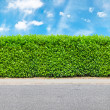 Stock Photo: Tall hedge with part of gravel road
